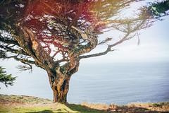 Alone (tropeone) Tags: ocean california summer usa tree point alone pacific roadtrip national seashore reyes