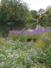 Dulwich Autumn Colours (Adam Swaine) Tags: flowers autumn england london english nature water canon seasons lakes parks ponds dulwich 2015 londonparks swaine