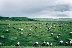R0031988 (xiaoran.bzh) Tags: china landscape gr  ricoh gansu