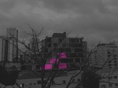 (Giovanne Ferreira) Tags: pink urban building tree square downtown rosa metropolis urbano prédio árvore metrópole quadrados
