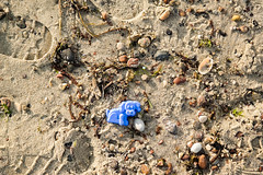 a Blue dog (PietkunPictures) Tags: blue sea dog storm beach animal toy sand outdoor stones samsung poland polish baltic pies 300 niebieski nx morze batyk plaa piasek zwierz zabawka sztorm foremka nx300 samsungnx300