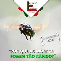 12108821_541783059304338_2337716998435380508_n (dedetizadoratservfranquia_tserv) Tags: abelha dengue barata insetos aranha ratos formiga escorpio cupim dedetizadora caixadegua franquiabarata portaiscapararatos