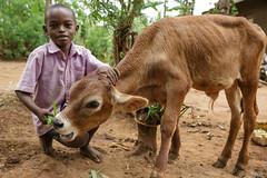 Uganda Biogas Project (Project # 21-0659-01) (Heifer International) Tags: uganda uga ug heiferinternational heiferuganda kinyole