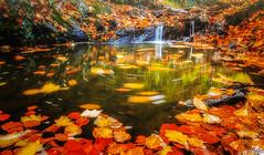 Ruisseau d'automne. (f.ray35) Tags: automne couleurs bretagne forêt feuilles mortes ruisseau exterieur poselongue