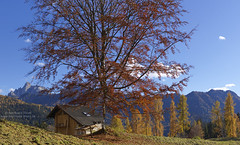 Belvedere, Pala (Bernhard_Thum) Tags: autumn alps nature herbst natur natura hasselblad alpen autunno alpi dolomites dolomiti pala dolomiten thum elitephotography landscapesdreams alemdagqualityonlyclub bernhardthum hc3550ii h5d60