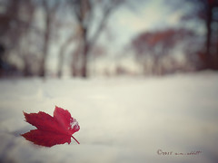 First Snow (ilovecoffeeyesido) Tags: autumn snow fall nature illinois midwest bokeh cellphone mobilephone redleaf snapseed motog3