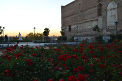lovers (Alison sx) Tags: madrid november flowers sunset flores atardecer lovers noviembre