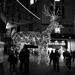 Rèin-fhiadh, Glaschu (Rhisiart Hincks) Tags: christmas blackandwhite bw blancoynegro reindeer scotland alba glasgow illuminations escocia schottland blancinegre nollaig nadolig glaschu blancetnoir écosse skotlanti duagwyn eskozia goleuadau zwartenwit yralban gouleier broskos zuribeltz feketefehér escòcia dubhagusbán nedeleg gwennhadu albain siyahvebeyaz koterana черноеибелое juodairbalta škotija černáabílá mustajavalkoinen чорнийібілий crnoibelo melnsunbalts scoția negrușialb dubhagusgeal اسودوابيض، črnoinbelo 黒と白、黑与白,schwarzundweis reinfhiadh karverch rhengarw