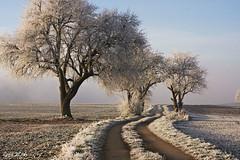 big - middle - small (leaving-the-moon) Tags: 2016 201612 baden bäume deutschland germany goodlight kraichgau landscape landschaft raureif sweethome trees whitefrost winter wood