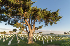 Fort Rosecrans National Cemetery (dVaffection) Tags: california sandiego cemetery pointloma military 14mm fortrosecrans