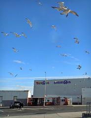 Birds R Us (Robert S. Photography) Tags: birds flying shoppingcenter gulls sky signs ceasarsbay brooklyn nyc nikon coolpix l340 iso80 january 2017