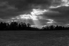Moody (11/365, January 11th) (Yannis_K) Tags: blackandwhite monochrome sunrays clouds darkskies treeline field woman walking yannisk nikond7100 nikon35mmf18dx project365