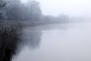 Eines nebeligen Morgens an der Eider; Süderstapel, Stapelholm (6)