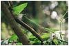 Enredate (Patrick J. Negwer) Tags: ecuador verde green kombi naturaleza nature amazonas amazon river rio agua water rocks piedras flores flowers orquideas quinua garden dogs perros