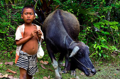 CAMBODIA - Angkor Forest (Massy........!!!) Tags: cambogia cambodia forest wild foresta selvaggio child bambino bufalo buffalo travel viaggio dettaglio detail angkor povero poor earthasia animale animal