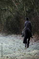 Riding in the Frost (ianbartlett) Tags: outdoors sunlight frost trees shadows horse riding twisted bulbs heathfieldpark signposts