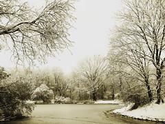 winter mood (Darek Drapala) Tags: mood winter sepia white lumix light landscape trees pond panasonic poland polska panasonicg5 park skaryszewski nature sad dark