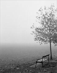 (frscspd) Tags: 70090015 20161015 pentax pentaxmx mx takumar takumar58mm 58mm ilford ilfordxp2 ilfordxp2400bw xp2 sonnar cambridge parkerspiece fog foggy bench solitary negativespace