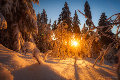 Winter Sunset (cfaobam) Tags: snow forest trees winter frost ice baum europe landschaft landscape travel photography nature national geographic cfaobam sony a7r schnee wald bäume tree groser feldberg hessen sunset sonnenuntergang globetrotter