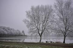 La Petite Sauldre à La Chapelle (Thierry.Vaye) Tags: berry hiver froid étang arbres banc gel