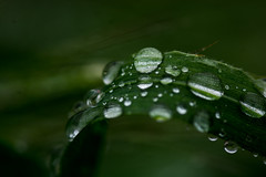 Magic Walk in Griffith (spencer_r_allen) Tags: griffithpark observatory losangeles ca california rain macro water droplets grass nikon d7100 tokina 100mm