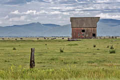 Old Time Country Feeling (socaltoto11) Tags: mountains oregon cattle cows country barns weathered farms weatheredwood redbarns oldfarms canonphotography mountainscenes oregonlandscapes countrylandscapes