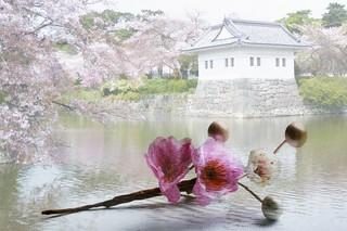 Week 36: Multi Exposure - Blossoms of Odawara