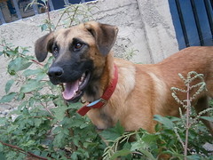 La mejor sonrisa del mundo. (Chrystian G.) Tags: dogs beautiful beauty animals pretty olympus perros animales hd sonrisa camara mascota lindos vg160