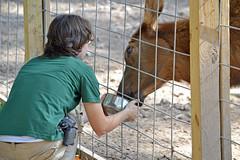Building Trust (MTSOfan) Tags: female eyecontact amy feeding matilda elk keeper epz