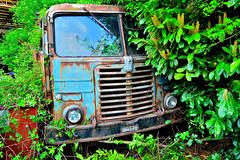 fiat 682N 125 (riccardo nassisi) Tags: auto abandoned car truck nikon rust ruins decay rusty camion scrapyard scrap ruggine relitto cremona deposito rottame sfascio epave abbandonata rottami d3200 casalmaggiore sfasciacarrozze autodemolizione demolitore