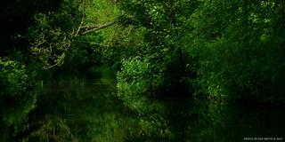River Reflections (II)