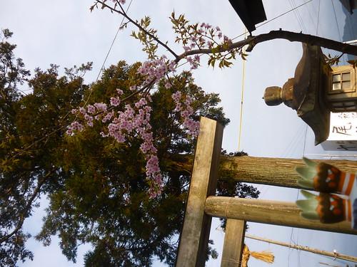 Binacle in Owase, Mie 6