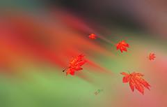 Herbststurm (Henry der Mops) Tags: autumn abstract herbst leafs blätter bunt img7976 autumnstorm herbststurm canoneos500d henrydermops mplez