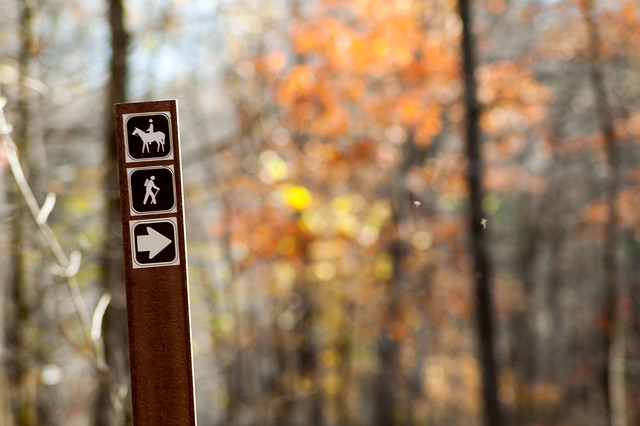 Charles C. Deam Wilderness Area - Grubb Ridge Trail - November 1, 1015