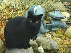 IMGP0672 (d_fust) Tags: cat kitten gato katze  macska gatto fust kedi  anak katt gatito kissa ktzchen gattino kucing   katje     yavrusu