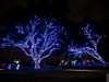 Vitruvian Lights 2015-7 (MikeyBNguyen) Tags: us texas unitedstates christmastree christmaslights christmastrees addison vitruvianpark vitruvianlights