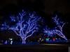 Vitruvian Lights 2015-7 (MikeyBNguyen) Tags: us texas unitedstates christmastree christmaslights christmastrees addison vitruvianpark vitruvianlights