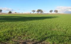 157 Ascot - Calala Lane, Loomberah NSW