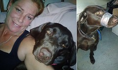 Woman Who Duct Taped Her Dogs Muzzle When He Wont Shut Up Now Facing Criminal Charges (viralworldnews) Tags: dog women cops tape abuse charges