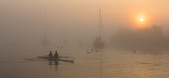 Sunrise over the Stour (Nick L) Tags: river stour riverstour mist misty fog rowers sunrise sun swans canon2470li canon5d3 5d 5d3 eos