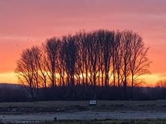 Sonnenuntergang am Rhein in Hitdorf (KL57Foto) Tags: hitdorf leverkusen rheinland nrw rhein kl57foto germany rhine olympus pen epm2 rhineland fluss dezember 2016 winter schwäne abendstimmung sunset sonnenuntergang
