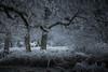 Rencontre hivernale (Luc Neuville) Tags: cold froid gel hédé brittany bretagne paysaje paysage landscape caballo horse cheval