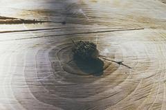 Mushroom (H o l l y.) Tags: lomography pentax analog 35mm film nature object plant mushroom tiny swirls tree stump shadow retro indie vintage