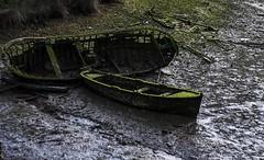 barcos1 (piricuet) Tags: boat moss