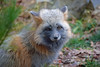 One of My Favorites (MTSOfan) Tags: grayfox lvz fox omnivore