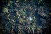 (anto291) Tags: villefranchesurmer mare conchiglia shell