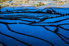 Blue and Gold Terrace (lycheng99) Tags: blueandgold morning sunrise riceterraces rice terrace terracefarming farming agriculture yuanyang yunnan china curves contours shape patterns water reflections sun man walk