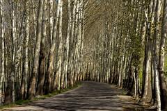 DSC_4592 (koorosh.nozad) Tags: trees baum iran isfahan ir persian persia spring