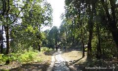 P1110005 Nice shady forest trails now nearing Pothana (ks_bluechip) Tags: nepal trek dec2016 annapurna abc mbc landruk tolga pitamdeorali pothana