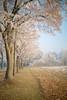 5F4B2029.jpg (schurik01) Tags: garching avenue allee walk winter